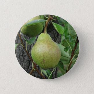 Green pears hanging on a growing pear tree 2 inch round button