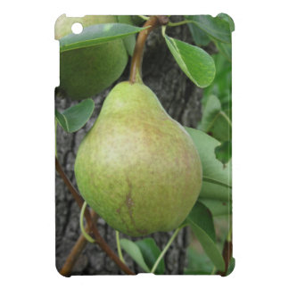 Green pears hanging on a growing pear tree iPad mini cover