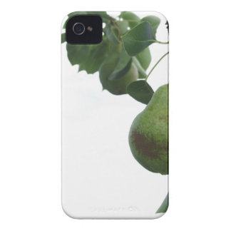 Green pears hanging on a growing pear tree iPhone 4 Case-Mate cases