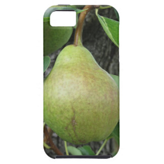 Green pears hanging on a growing pear tree iPhone 5 case