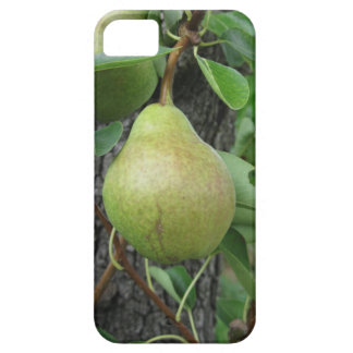 Green pears hanging on a growing pear tree iPhone 5 cover