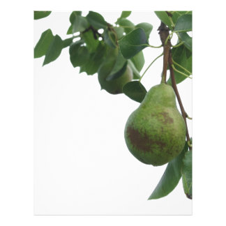 Green pears hanging on a growing pear tree letterhead