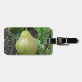 Green pears hanging on a growing pear tree luggage tag