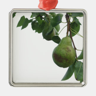 Green pears hanging on a growing pear tree metal ornament