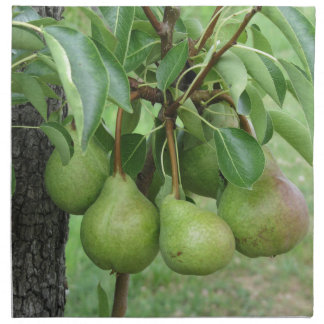 Green pears hanging on a growing pear tree napkin