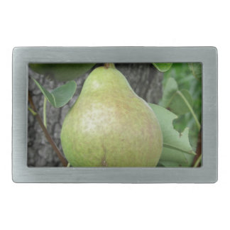 Green pears hanging on a growing pear tree rectangular belt buckle