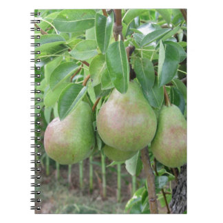 Green pears hanging on a growing pear tree spiral notebook