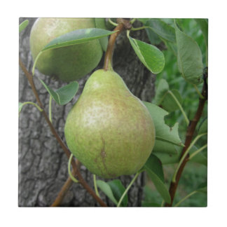 Green pears hanging on a growing pear tree tile
