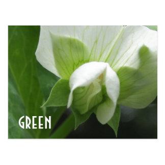GREEN peas Pea Blossom custom template postcard