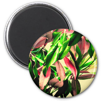 Green & Pink Leaves 2 Inch Round Magnet