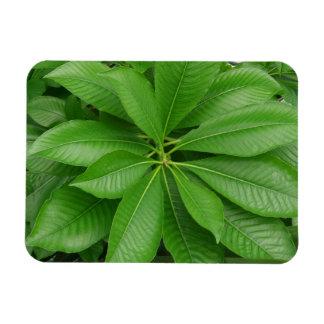 "Green Plant 3""x4"" Magnet"