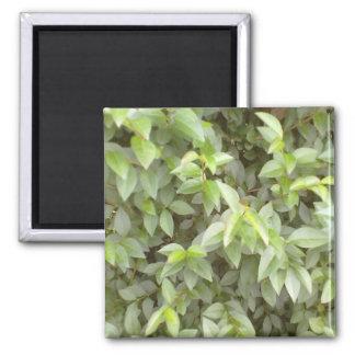 Green plant leaf fridge magnet