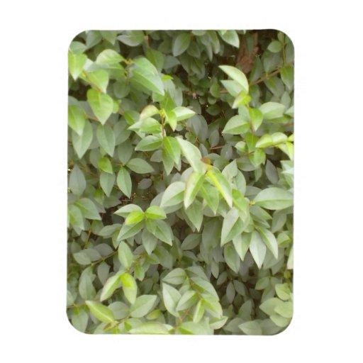Green plant leaf magnet