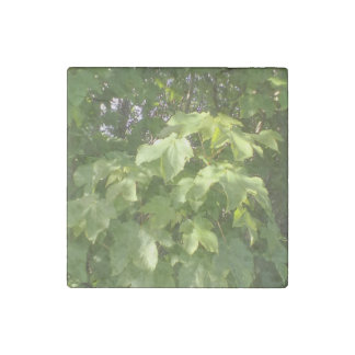 Green plant leafs stone magnet