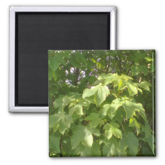 Green plant leafs square magnet