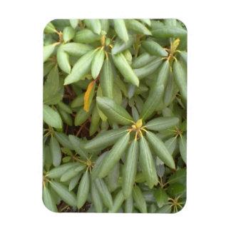 Green plant vinyl magnets