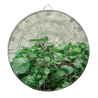Green Plants Against Concrete Wall Dartboard