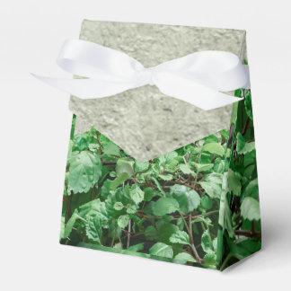 Green Plants Against Concrete Wall Favor Boxes