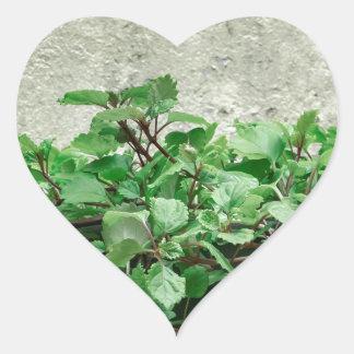 Green Plants Against Concrete Wall Heart Sticker