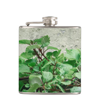 Green Plants Against Concrete Wall Hip Flask