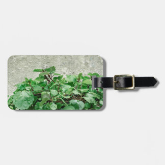Green Plants Against Concrete Wall Luggage Tag