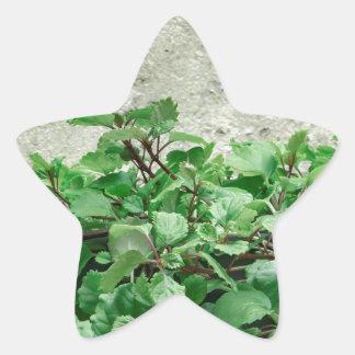 Green Plants Against Concrete Wall Star Sticker