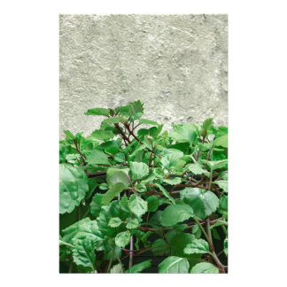 Green Plants Against Concrete Wall Stationery
