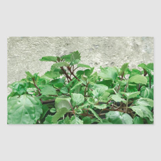 Green Plants Against Concrete Wall Sticker