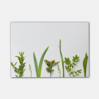 Green Plants Isolated on White Background Post-it Notes