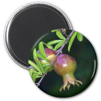 Green pomegranate fruit 2 inch round magnet