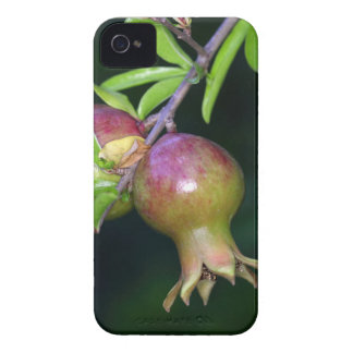 Green pomegranate fruit iPhone 4 Case-Mate cases