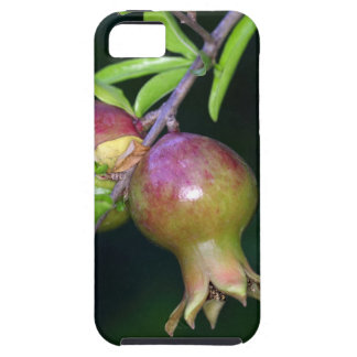 Green pomegranate fruit iPhone 5 case