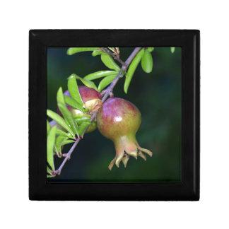 Green pomegranate fruit keepsake box