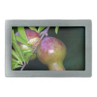 Green pomegranate fruit rectangular belt buckles