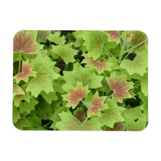 "Green/Red Leafs 3""x4"" Magnet"