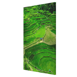 Green Rice terraces, Philippines Canvas Print
