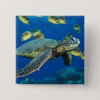 Green Sea Turtle 2 Inch Square Button