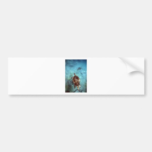 Green sea turtle and sea lion underwater Galapagos Bumper Stickers
