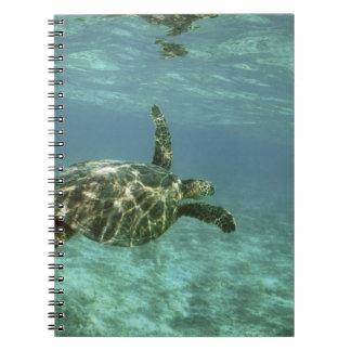 Green Sea Turtle, (Chelonia mydas), Kona Coast, Notebook