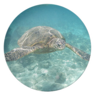 Green Sea Turtle Dinner Plate