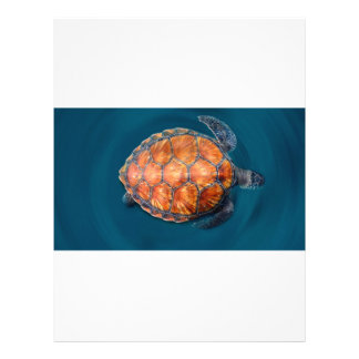 Green Sea Turtle Letterhead