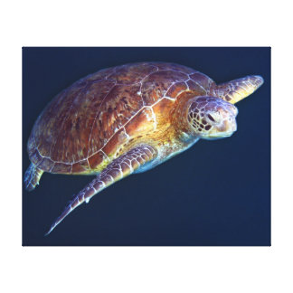 Green Sea Turtle on the Great Barrier Reef Gallery Wrap Canvas