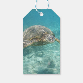 Green Sea Turtle Pack Of Gift Tags