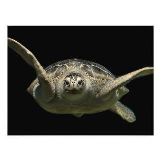 Green sea turtle photo print