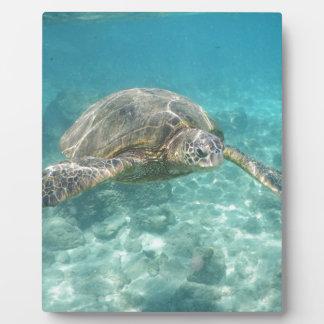 Green Sea Turtle Plaque