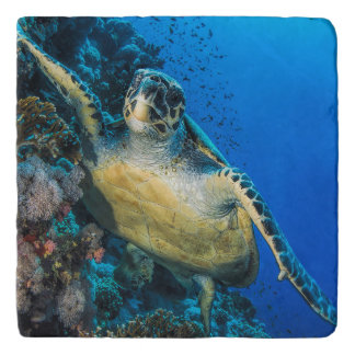 Green Sea Turtle | Red Sea Trivet