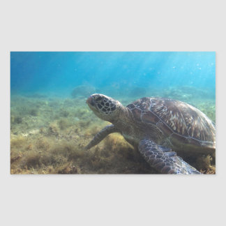 Green sea turtle relaxing underwater sticker