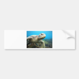 Green sea turtle resting underwater Galapagos Bumper Sticker