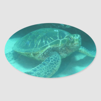 Green Sea Turtle Oval Stickers