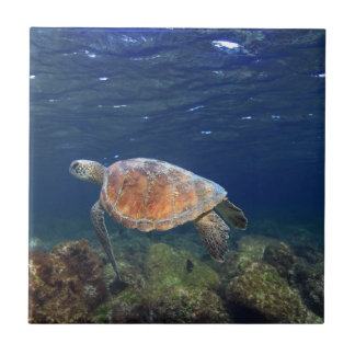Green sea turtle underwater paradise island tile